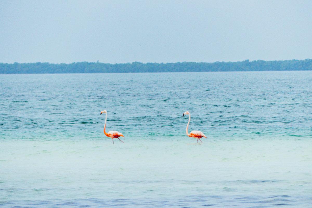 Que faire au Mexique – itinéraire de 2 semaines au Yucatan