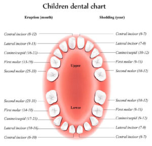 At What Age Do Baby Teeth Fall Out? – Manfred Orthodontics