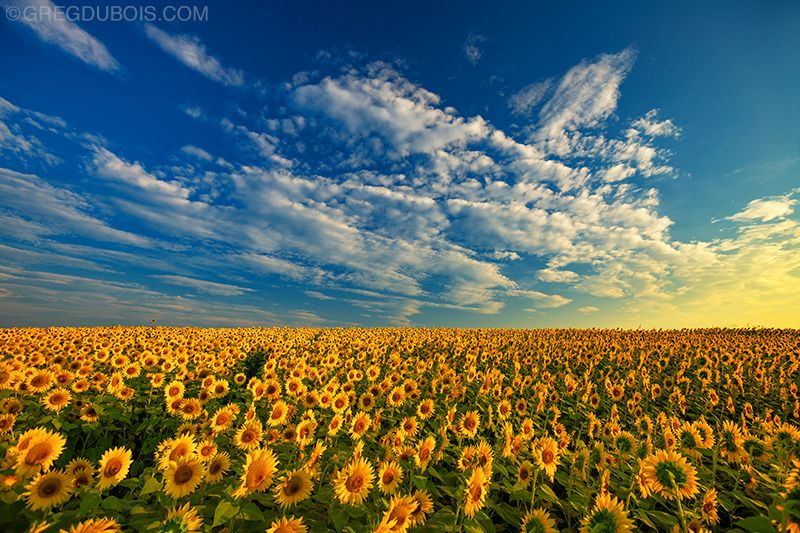 Fall Sunflower Wallpaper What You Need To Take With You For Landscape Photography