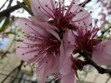 maria-cazacu-primăvara-03