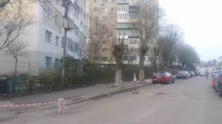 toaletare-pomi-strada-Negru-Voda-Mangalia-02b