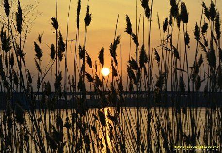 Valerian Şarînga apus de soare la Mangalia-01