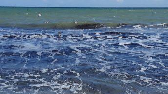 marea-la-mangalia-nov2018 (15)