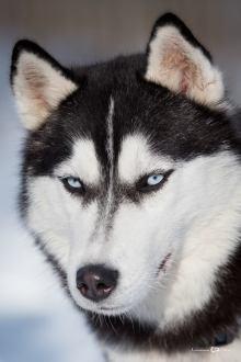 Lucian-Alin-Sarbu-frumosii-cu-ochi-albastri (1)