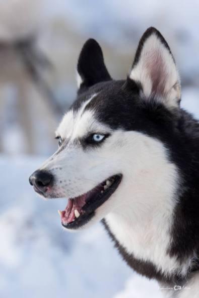 Lucian-Alin-Sarbu-frumosii-cu-ochi-albastri (10)