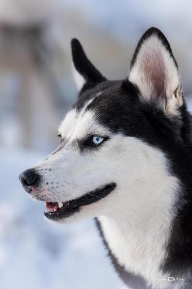 Lucian-Alin-Sarbu-frumosii-cu-ochi-albastri (14)