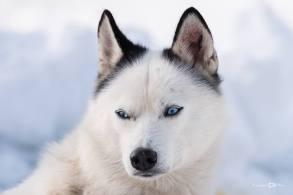 Lucian-Alin-Sarbu-frumosii-cu-ochi-albastri (17)