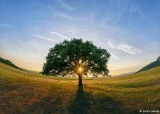 Costi_Carîp-copacul-lui-MirceaB-03e