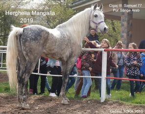 Gabriel-Tora-cai-si-copii-22-Herghelia-Mangalia
