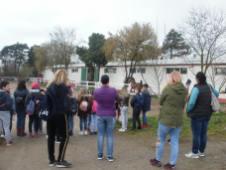 copii-din-județul-Constanța-au-vizitat-Herghelia-Mangalia-08