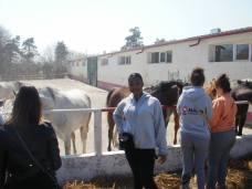 copii-din-județul-Constanța-au-vizitat-Herghelia-Mangalia-13