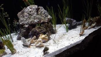 Dallas_World_Aquarium_MN (47)