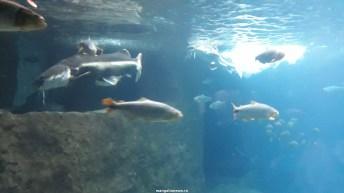 Dallas_World_Aquarium_MN (67)
