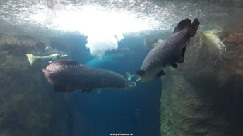 Dallas_World_Aquarium_MN (70)
