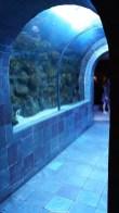 Dallas_World_Aquarium_MN (77)