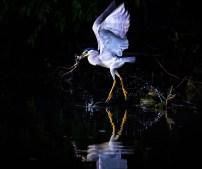 Sorin Onisor - Delta Dunarii-02-la ceas de seara