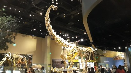 Perot Museum of Nature and Science din Dallas (49)