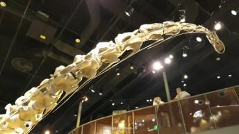 Perot Museum of Nature and Science din Dallas (66)