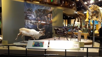 Perot Museum of Nature and Science din Dallas (71)