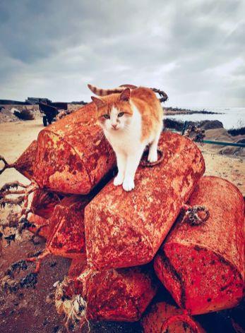 Vlad Eftenie - Fisherman's cat - Vama Veche8
