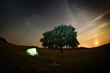 Mircea Bezergheanu - Proiect Dobrogea-28 la copac, noaptea
