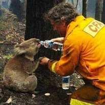 Pray for Australia21