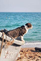 Vlad Eftenie - pisica pescarilor - Vama Veche