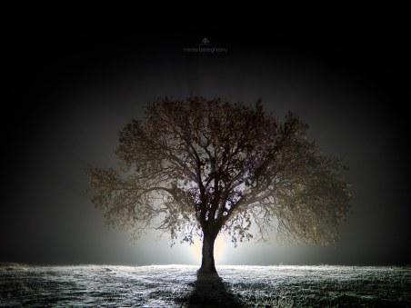Mircea Bezergheanu - Proiect Dobrogea - ian2020-Copacul