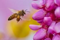 Alex Brighila - Bee free!