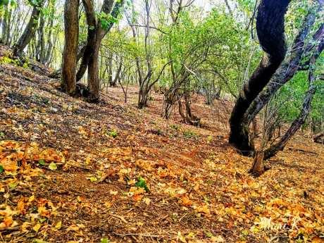 Bisericuțele rupestre de la Dumbrăveni Foto Maria Cazacu-06