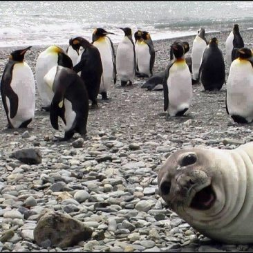 The best photo bomb EVER