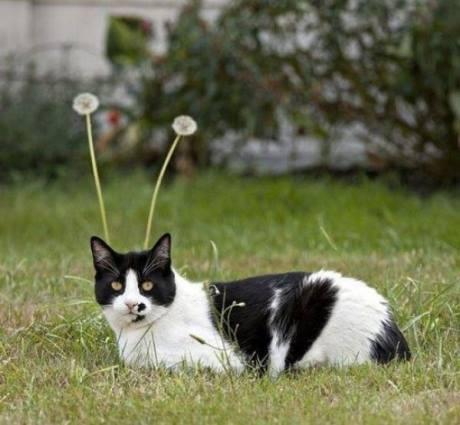 pisicuta cu antene