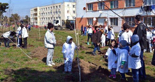 plantari-puieti-tinerii-liberali-mangalia-43