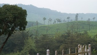 kadamane_estate (11)