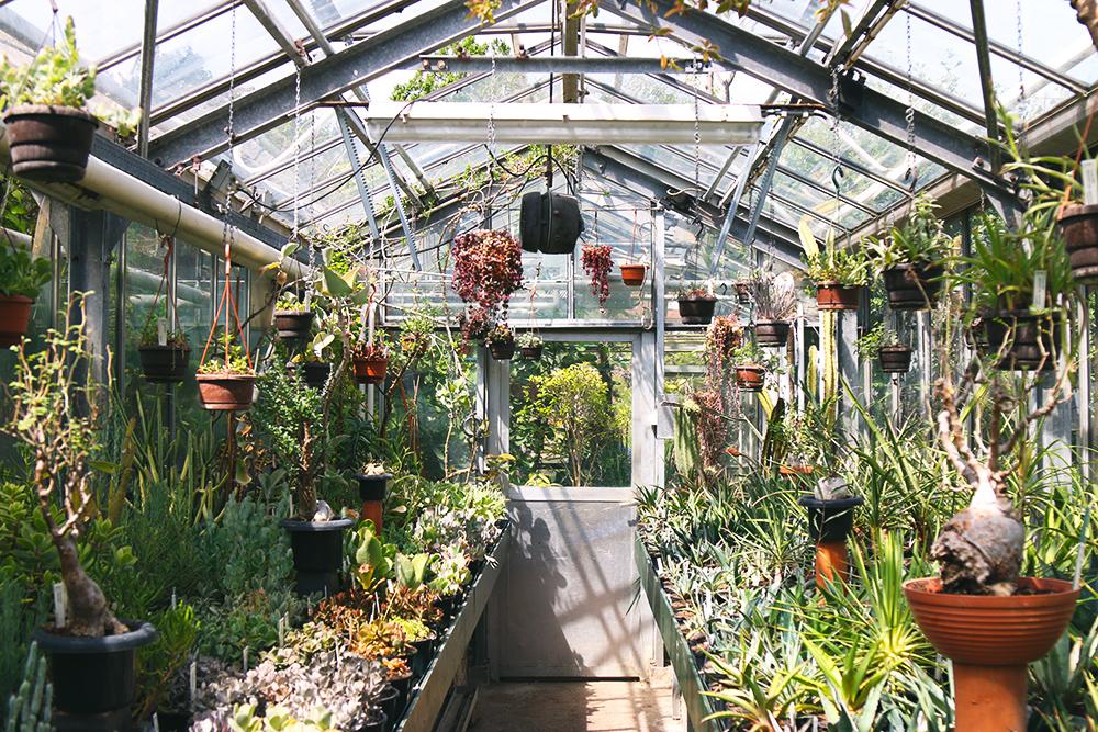jardin botanique zuidas d amsterdam
