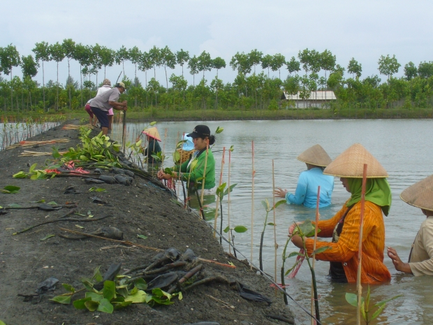 Rehabilitation and Sustainable Use of Mangroves at Pesantren Village