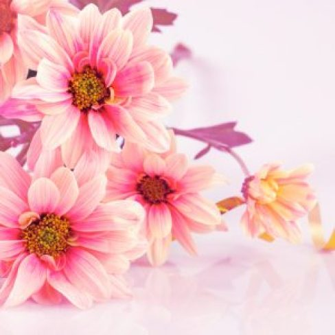 how-to-put-flower-wallpaper-up-mothers-day-Qrufhm