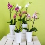 Fantástico! Aprenda a cultivar Orquídeas na sua casa! Veja matéria.