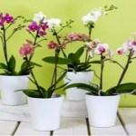Dica fantástica! Aprenda como cultivar Orquídeas em casa!