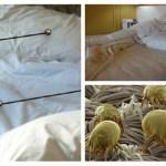Descubra como eliminar os ácaros que vivem em sua cama