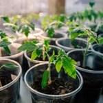 9 alimentos consumidos e que podem ser replantados