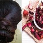 Shampoo de hibisco: receita caseira que ajuda no crescimento dos fios