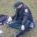 Policial conforta cachorra atropelada até a ajuda chegar e foto viraliza na internet