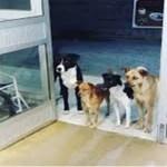 Quando um morador de rua foi internado, cães esperam na porta do hospital; confira
