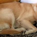 Cão aparece diariamente na casa de uma mulher para dormir. Curiosa com o animal, resolveu escrever um bilhete para o dono
