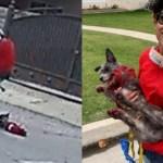 Mulher é filmada arrastando cachorro num patinete elétrico