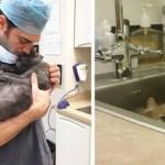 """Clínica veterinária abriu vaga de emprego para """"abraçador de gatos"""""""