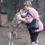 Cão perdido finalmente encontra sua dona e emociona abrigo