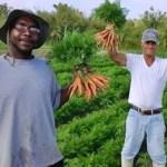 Fazenda de alimentos orgânicos contrata apenas moradores de rua