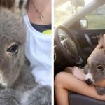 """Jovem salva a vida de um pequeno burro se tornando sua nova """"mãe"""""""